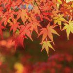 紅葉狩りと心ゆくままに楽しむオンリーワン【陶芸体験】