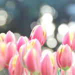 【オンリーワンの花器】で春の花を楽しむ