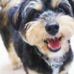 愛犬のための【愛情たっぷり陶器製フードボウル】